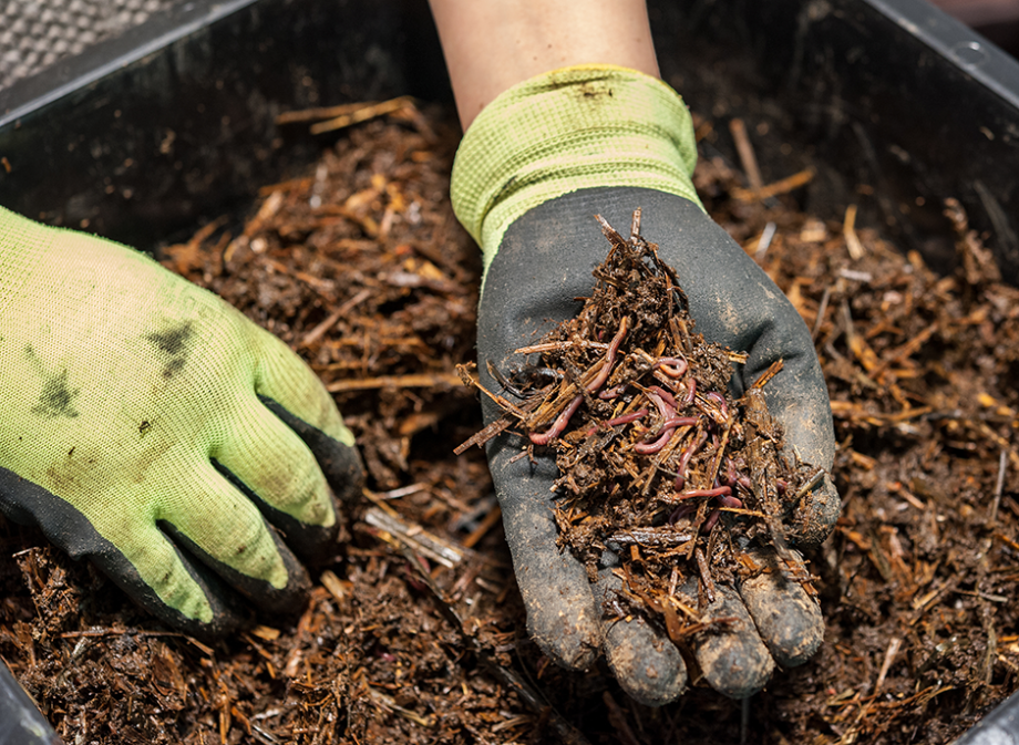 compost miscanthus